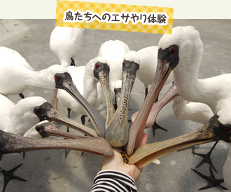 鳥たちへ餌やり体験