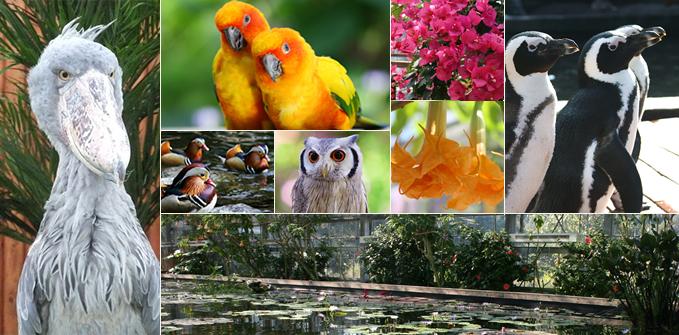 「掛川花鳥園」の画像検索結果