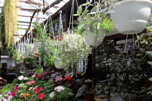 flower_shop_turi_mono_700