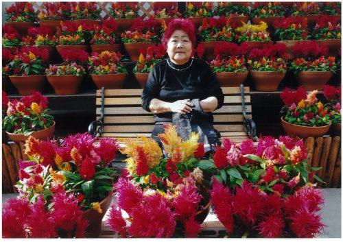 ケイトウとおばあちゃんの奇跡のコラボ