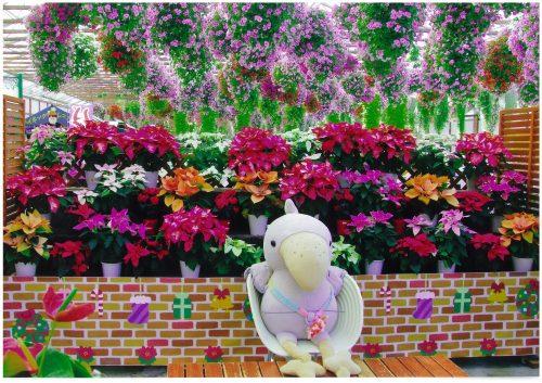 ようこそ花鳥園へ