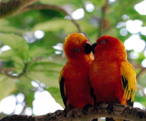 幸せを運ぶ鳥 森ひな乃