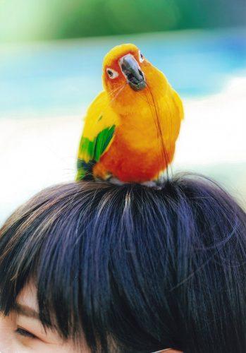 掛川観光協会賞 毛づくろい、ありがとう。
